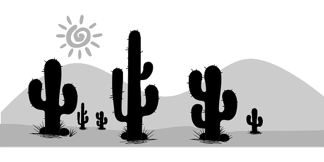 黒白の太陽とサボテン